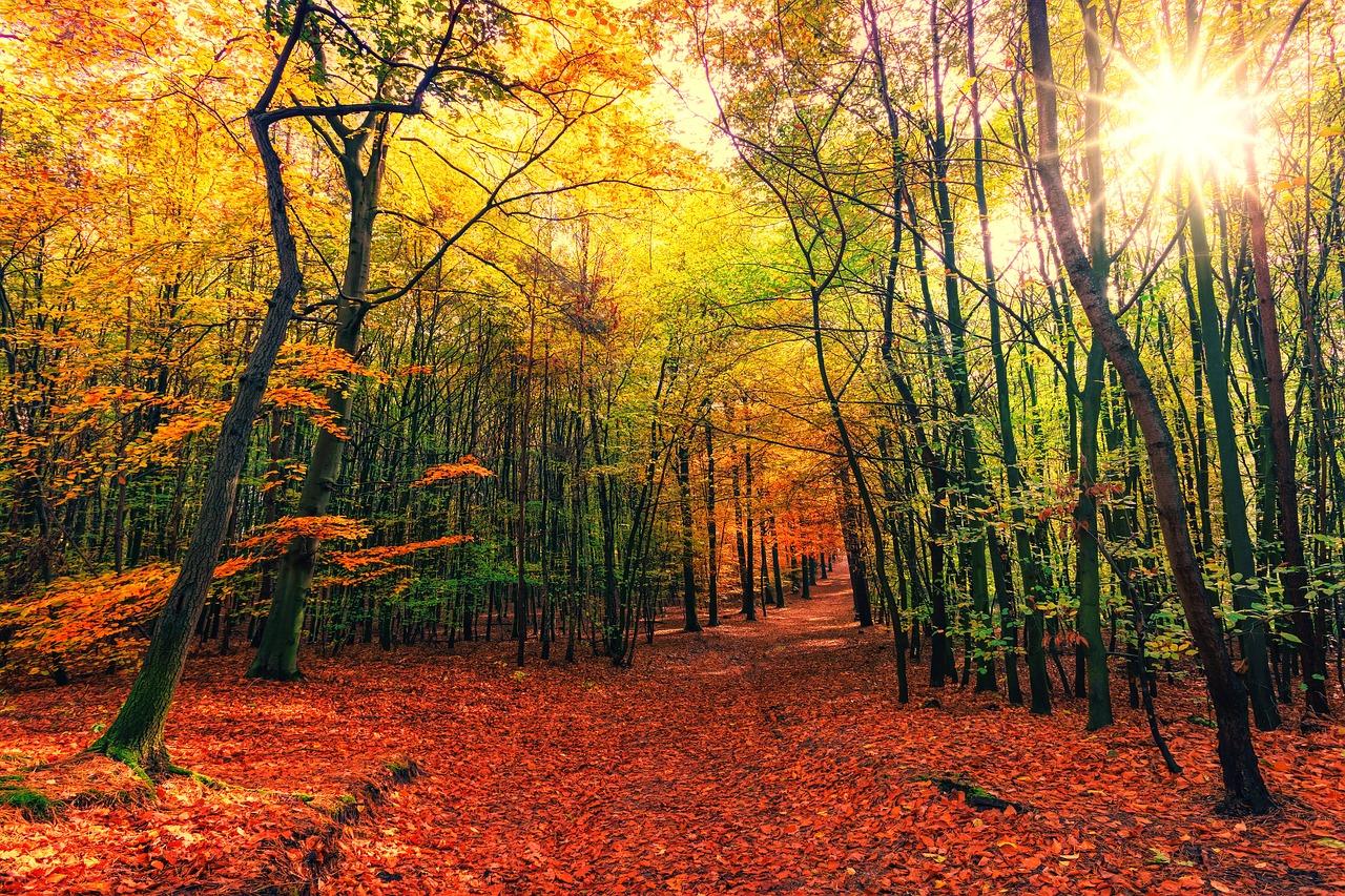 Les avantages d'un investissement forestier